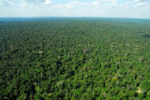 Modelo de gestão e incentivo ao uso sustentável da Amazônia