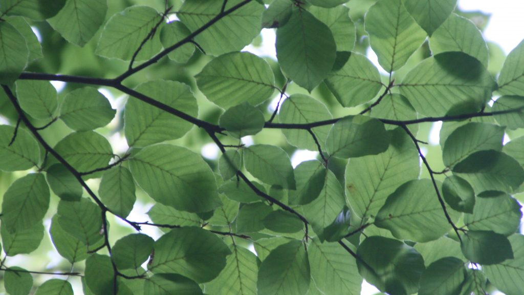 branch-green-greenery-72509